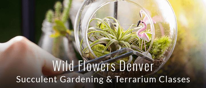 Wild Flowers - Succulent Gardening and Terrarium Classes
