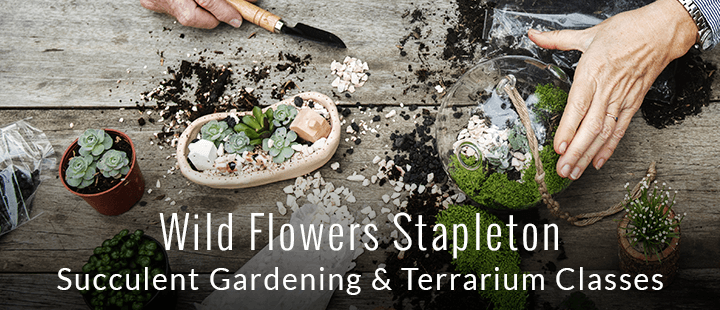 Wild Flowers - Succulent Gardening and Terrarium Classes