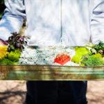 32-wild-flowers-denver-stapleton-succulent-gardening-terrarium-classes (1)